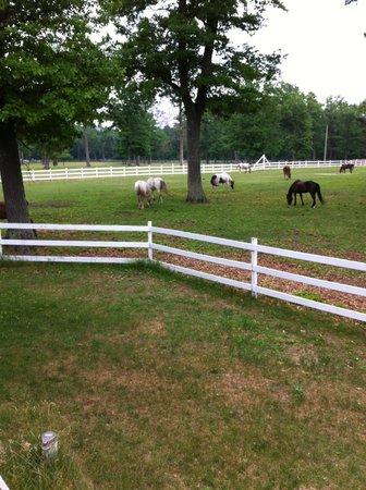 Wolf Lake Ranch Resort: pastures/horses