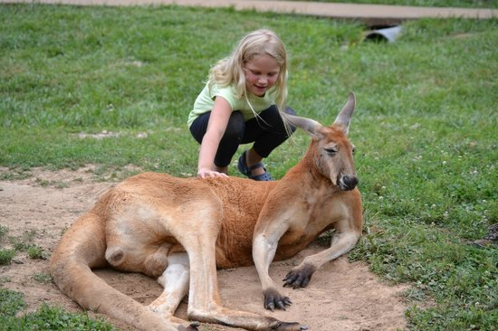 Kentucky Down Under Adventure Zoo: Petting a Kangaroo
