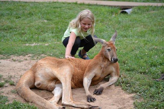 Kentucky Down Under Adventure Zoo照片