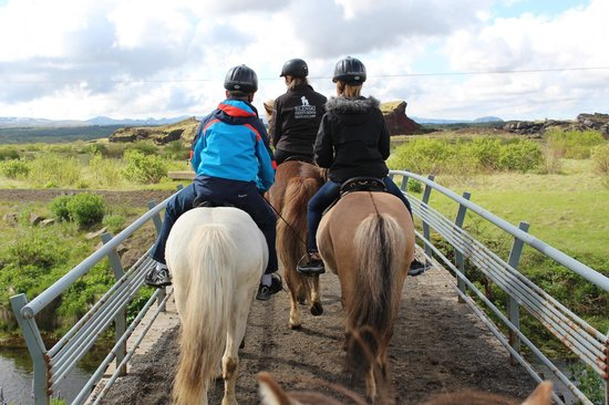 Islenski Hesturinn, The Icelandic Horse - Riding Tours