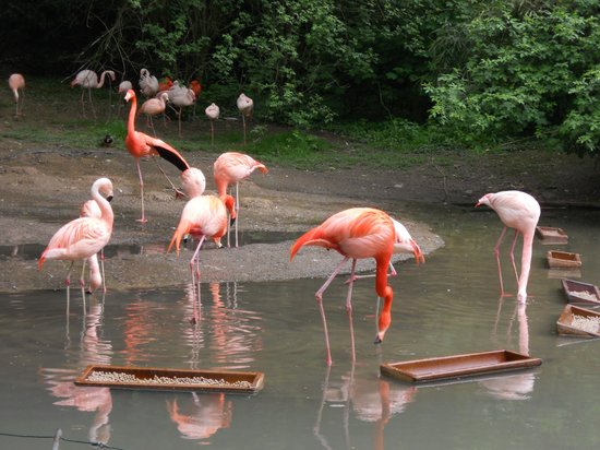 Zoo Wuppertal: Flamingos