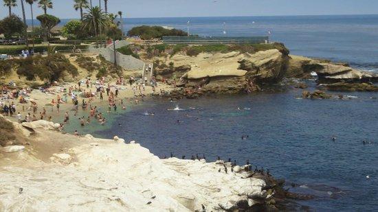 La Jolla Cove: Shot of the cove and seals