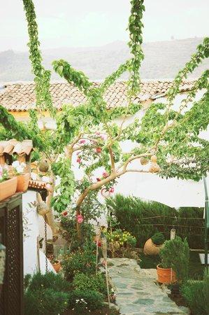 Markiz Konaklari Boutique Hotel: gardens at hotel, very nice