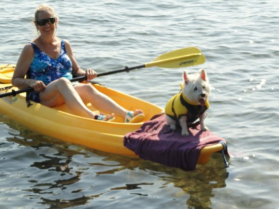 Torch Lake Bed & Breakfast : Even Molly our West Highland Terrier loves to kayak