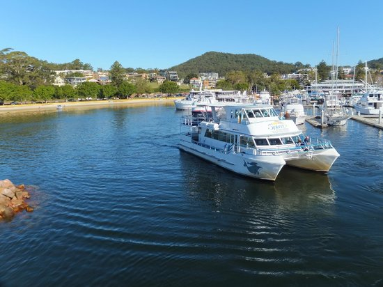 Port Stephens Parasailing: The other boat going to look for whales........ohhhh