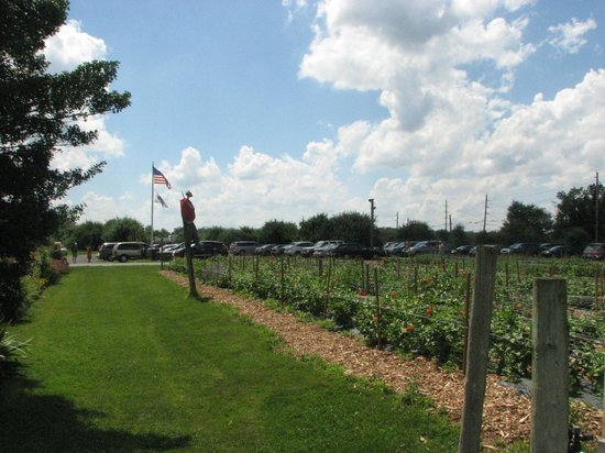 Terhune Orchards & Winery: Flower garden with scarecrow