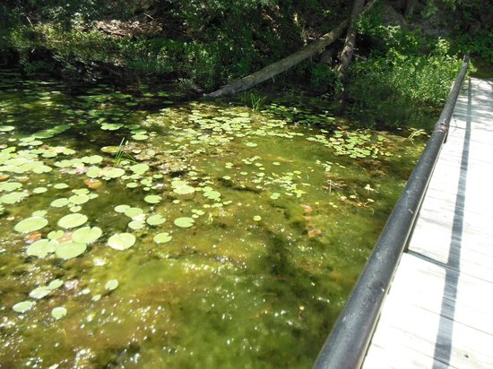 Innisfree Gardens: the bog