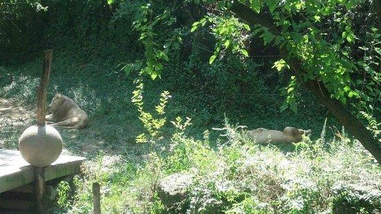Foto De Cincinnati Zoo Botanical Garden Cincinnati Visiting A Relative Tripadvisor