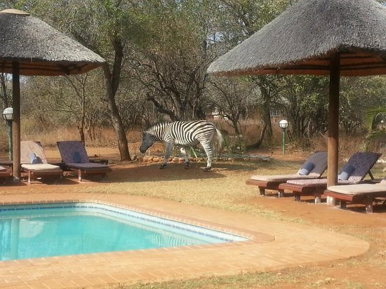 Marloth Park, Sudáfrica: One of the locals