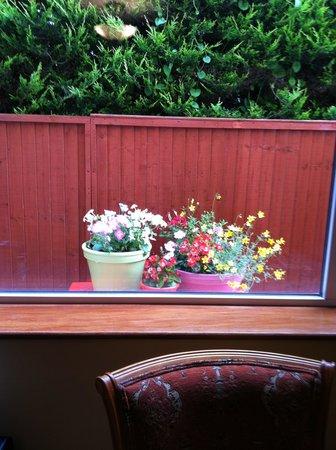 Ashlee Lodge: View of flowers outside window