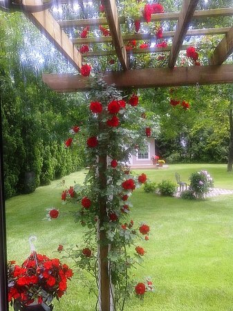 Abacot Hall Bed & Breakfast: Roses 1
