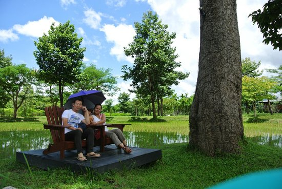 The River Resort: Twin chairs in rice field