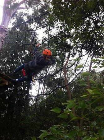 Urban Jungle Adventure Park : just hanging!