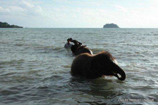 Kai Bae Beach: Elephants and Gulf of Thailand...Koh Maak in the distance