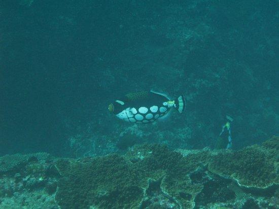 Bali Breizh Divers: autre
