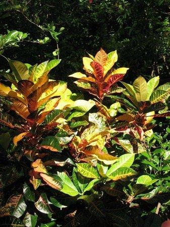 East Bedarra Island Retreat: Beautiful plant