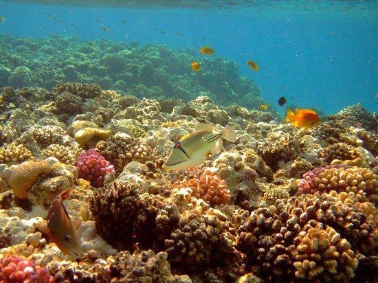 Fort Arabesque Resort, Spa & Villas: come in un acquario