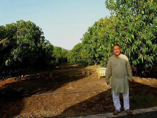 Sukhsagar Gir Resort: Mango farming inside the hotel area