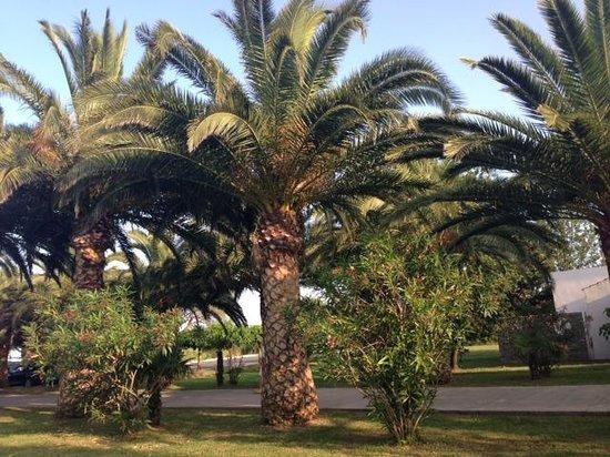 La Vallicella : Les allées du village vacance