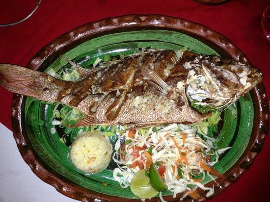 Langosteria Maya Restaurant : Excellent Fresh Red Snapper