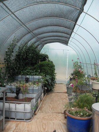 La Siesta Campgrounds: Aquaponics greenhouse....COOL!