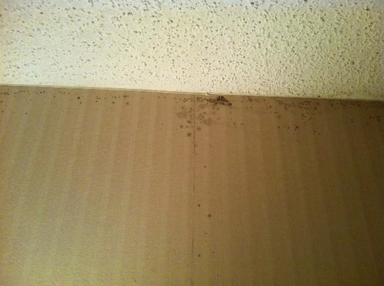 Harborside Hotel: Mold on the ceiling