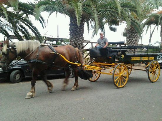 Restaurante Equestre: Free pick up from hotel