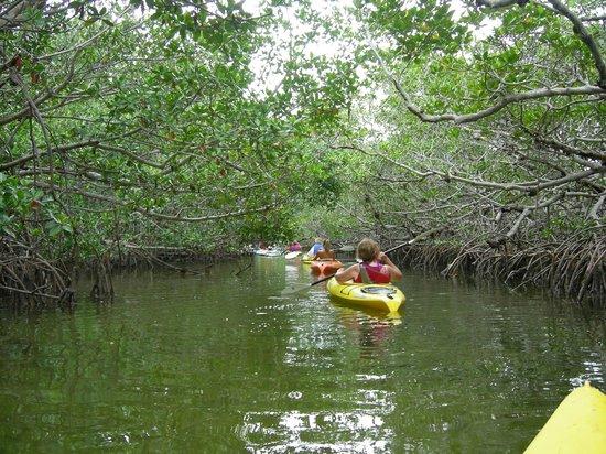 Lazy Dog Adventures: More mangroves
