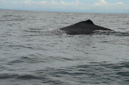 Whale Watching Panama: Sailing