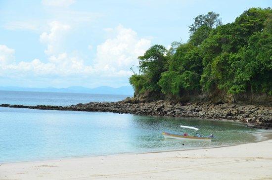 Whale Watching Panama: Contadora Island