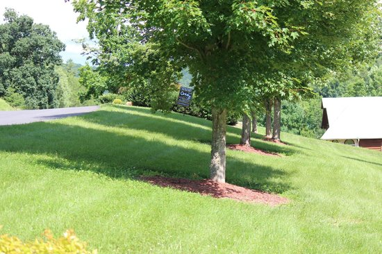 Cedar Falls Cabin Rentals : Brookside Yard