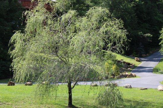 Cedar Falls Luxury Cabin Rentals: Cedar Falls Resort