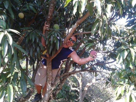 La Garita Bed and Breakfast: picking mangos in the b&b yard.