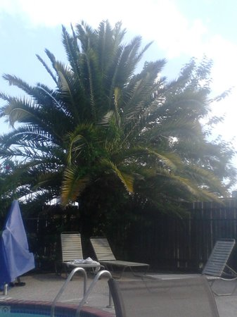 Holiday Inn Express - Houston: Soothing palm trees