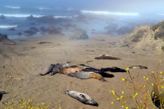 Moonstone Drive: Leões marinhos tomando sol