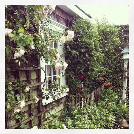 Beautiful climbing roses outside the Sherburne Inn