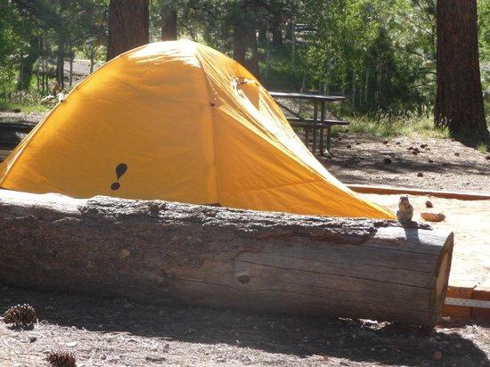 North Rim Campground: tent location