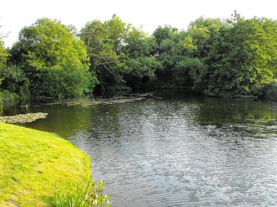 Mill Lane Bed & Breakfast: Creek view from Garden