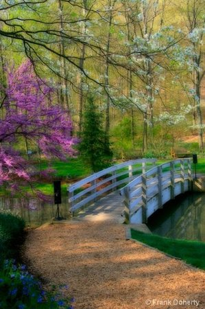 Edith J. Carrier Arboretum