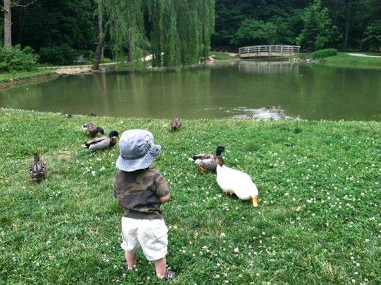 Edith J. Carrier Arboretum: Visitors of all ages enjoy the arboretum.