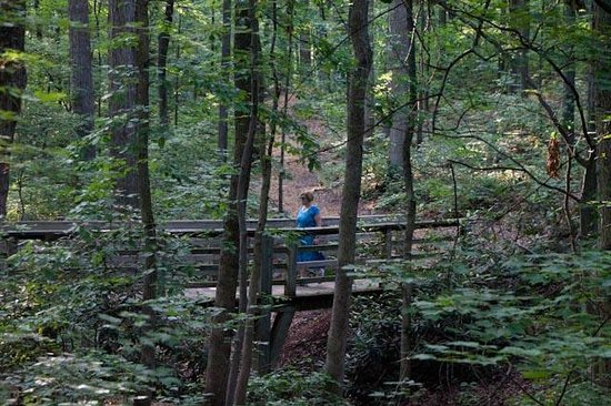 Edith J. Carrier Arboretum: The woodland trails are cooled and serene.
