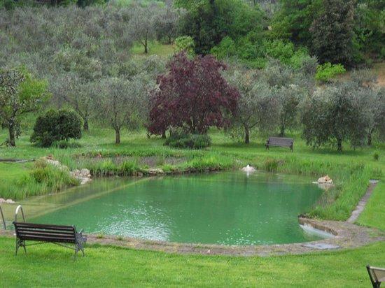 Agriturismo Podere San Lorenzo: Piscina biologica