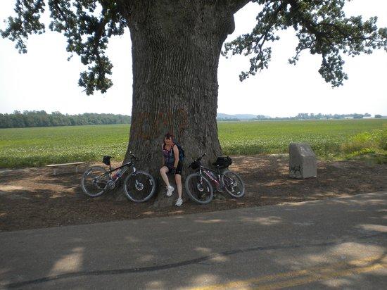 Katy Trail State Park: Big Oak tree just off the trail