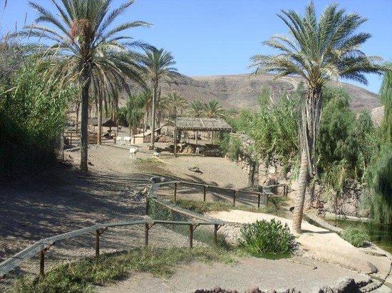 Surroundings - Picture of Oasis Park Fuerteventura, Fuerteventura - TripAdvisor