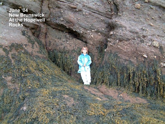 Fundy National Park: You can see that this is actually ocean floor, but the tide is way out!