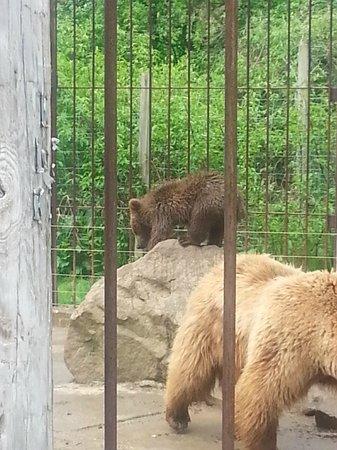 Living Treasures Animal Park: Playing