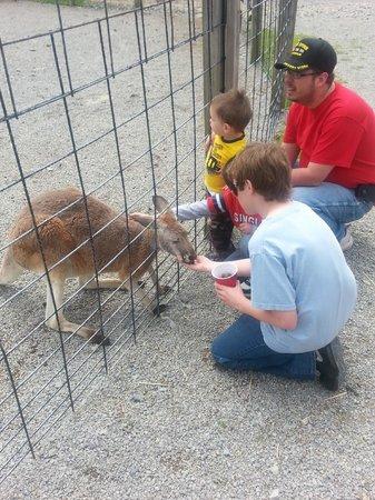 Living Treasures Animal Park: He loved the kangaroo