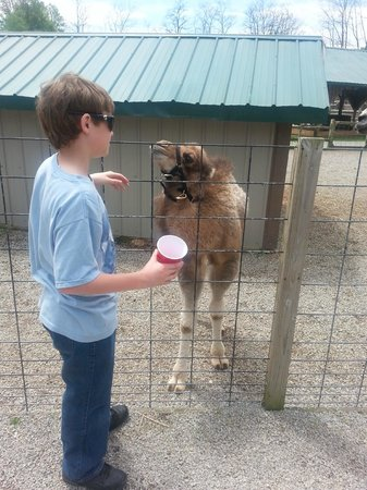 Living Treasures Animal Park: Baby Camel
