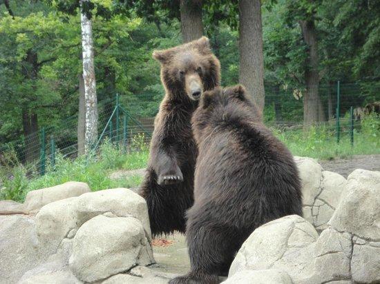 Zoo Brno: bear enclosure
