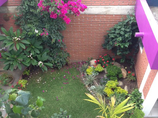 Casa de los Angeles : beautiful, well-kept garden. my favorite were the plumerias!